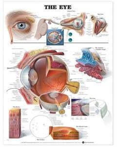 09-31-9691 The Eye Chart