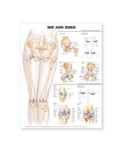 09-31-9780 Hip and Knee Chart