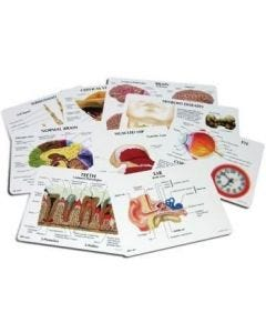 09-83-810 Anatomy Education Cards-27/Set