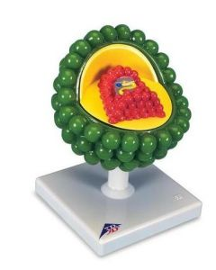 10-81-1240 HIV Model