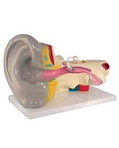 10-81-3222 Ear Model