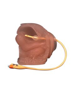 10-81-6104 Female Catheter Model