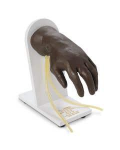 11-81-1139 Nasco Life/form® Advanced IV Hand - Dark