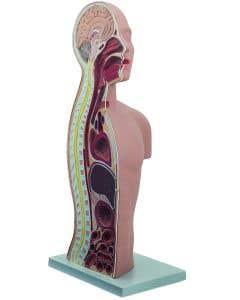 11-81-2508 Pocket Nurse® NG and  Tracheostomy Teaching Torso Bundle