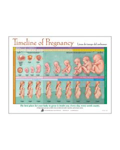 Timeline of Pregnancy Chart