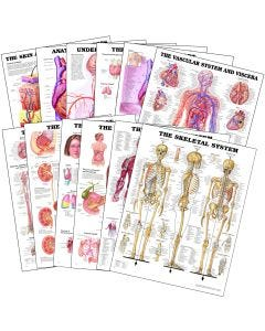 09-31-1295 Pocket Nurse® Anatomical 12 Chart Package