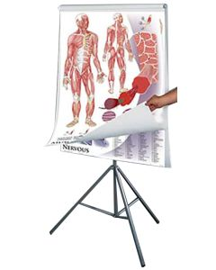 Anatomy and Physiology Charts