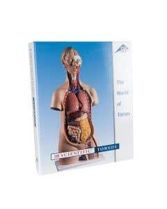 09-79-201 Human Torso Anatomy Teaching Guide