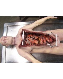11-81-0131 Deluxe Autopsy Male Cadaver