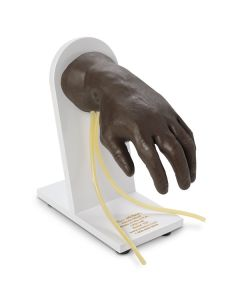 11-81-1139 Nasco Life/form® Advanced IV Hand - Dark